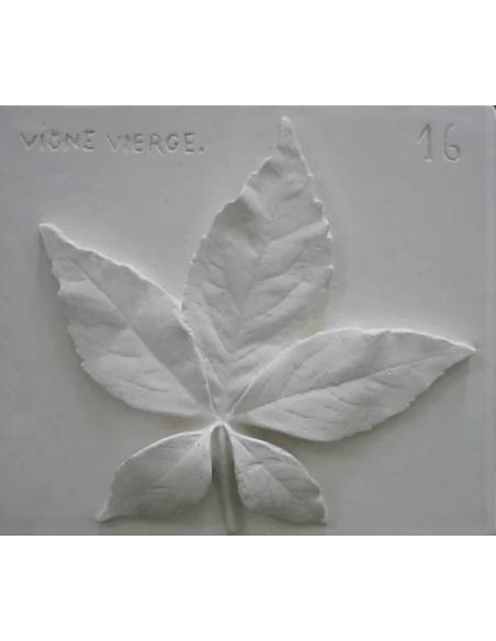 Virginia creeper leaf