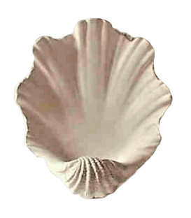 Giant clam shell vessel