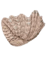 Giant clam shell vessel sink