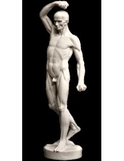 L'écorché marchant par Jean-Antoine Houdon