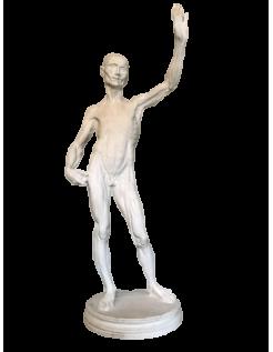 L'écorché by Riccardi