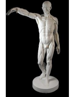 L'Écorché, bras droit tendu devant por Jean-Antoine Houdon