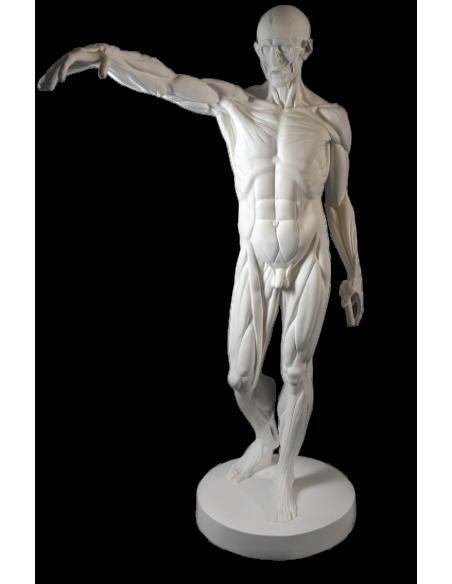 L'Écorché, bras droit tendu devant par Jean-Antoine Houdon