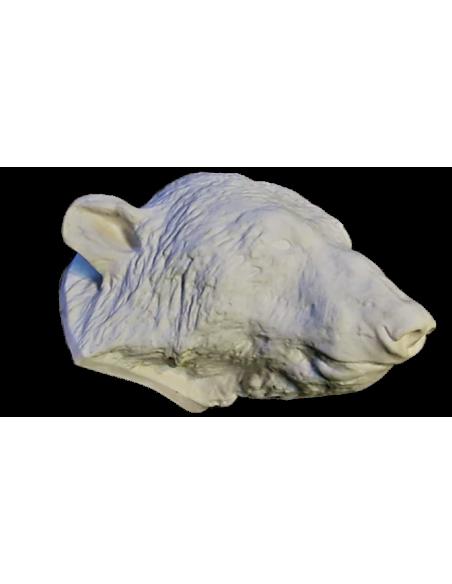 Tête d'ours moulée à partir d'un original