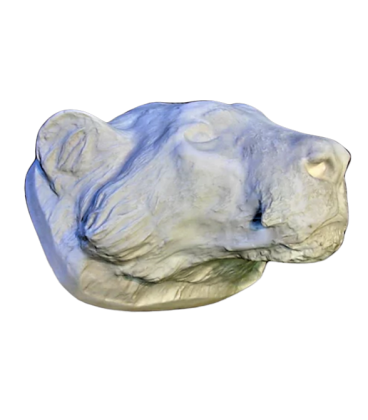Tiger head moulded from an original