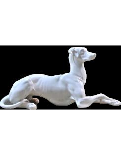 Elegante galgo acostado con las patas cruzadas de lado izquierdo