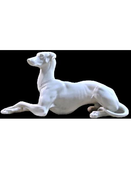 Elegant greyhound lying cross-legged on his right side