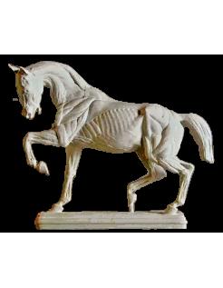 Cheval écorché par Isidore Bonheur