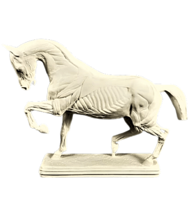 Horse flayed by Isidore Bonheur