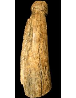 Phallus of the Blanchard cave - Castel-Merle