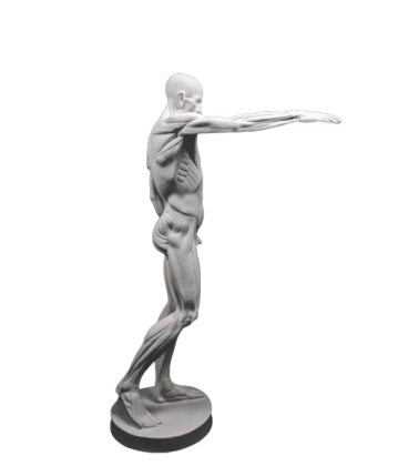 The Flayed man or l'Ecorché, inspired by Jean-Antoine Houdon